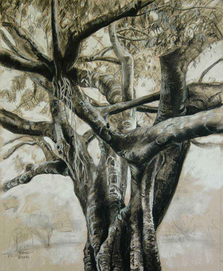 Fig Tree Drawing 2